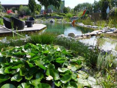 Lebendige Pflanzenwelt im eigenen Schwimmteich